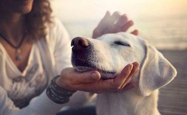 pets-blog-3